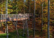 Holzbrücke zwischen Bäumen